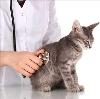 Ветеринарные клиники в Турках